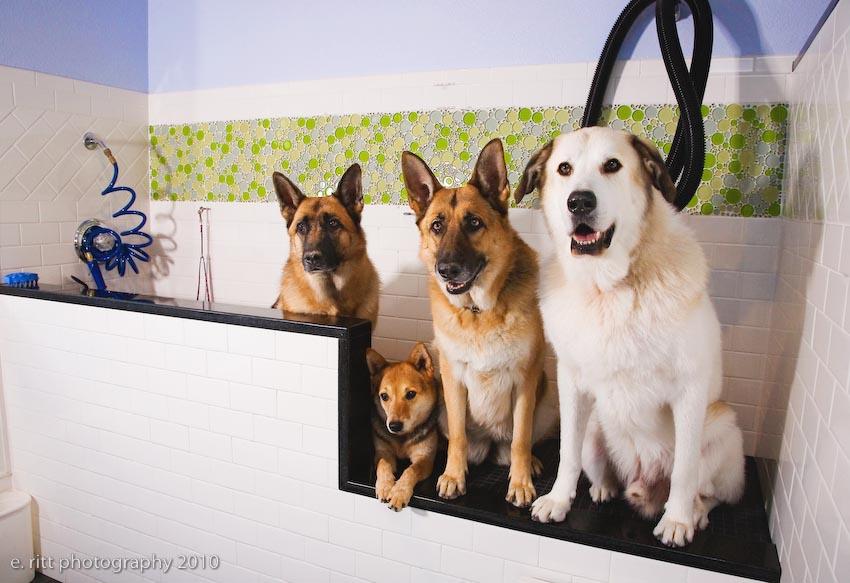 Heavenly dog professional dog training and self service dog wash dog training makes happy dogs solutioingenieria Images
