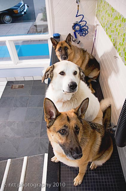 Heavenly dog professional dog training and self service dog wash self service dog wash with top quality cleaning supplies solutioingenieria Images