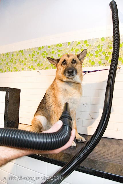 Heavenly dog professional dog training and self service dog wash self service dog wash with top quality cleaning supplies solutioingenieria Choice Image